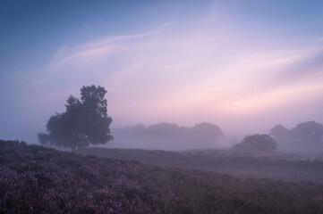 Mistige zonsopgang boven Nederlands heidelandschap met bloeiende heide. Drenthe, Nederland.