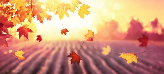 Obraz Falling Autumn Maple Leaves Natural Background - fototapety do salonu
