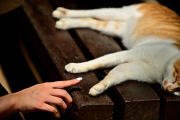 Obraz 고양이와의 교감 - fototapety do salonu