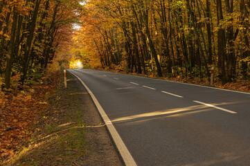 Asfaltowa droga w jesiennym lesie. Rosnące po obu stronach drogi drzewa przechylone są w jej stroną tworząc malowniczy tunel. Pomiędzy drzewami przebijają się promienie słoneczne.