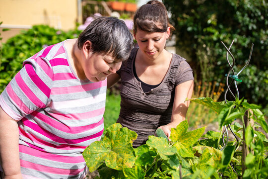 mentally handicapped and disabled woman and a caregiver looking at cucumbers in a raised bed