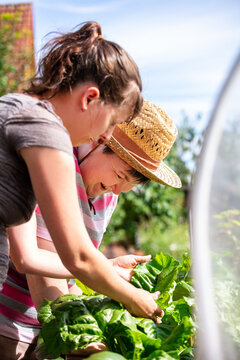 a mentally disabled woman and a caregiver standing at a raised bed in the garden and harvest mangold together