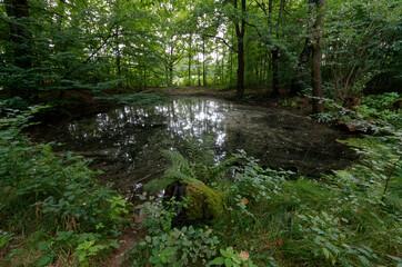 Fototapeta Podmokłe łąki za tamą wzdłuż rzeki Wisły obraz