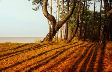 morze, wydmy, las, cienie
