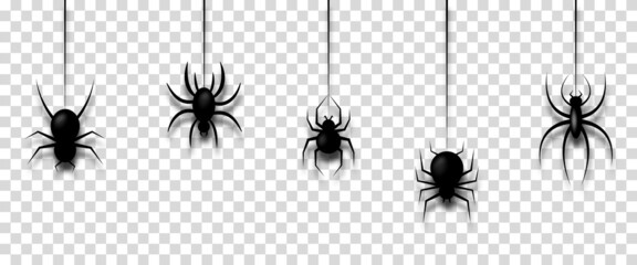 Vector illustration with hanging spiders for decoration and covering on transparent background. Creepy background for Halloween
