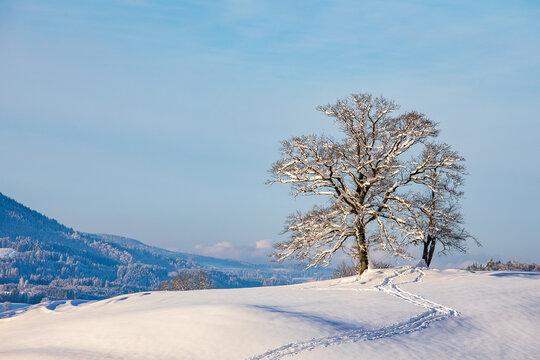 Winter - Schnee - Allgäu - Baum - Schöllang - Oberstdorf - Alpen