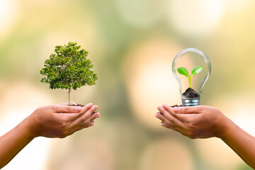 Obraz human hand planted trees and small trees growing in light bulbs on human hands to conserve earth day environmental conservation concept - fototapety do salonu