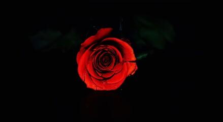 Obraz rose - fototapety do salonu
