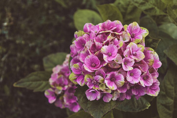 Obraz Piękny kwiat  - fototapety do salonu