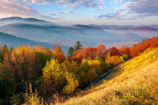 mountainous countryside in autumn at sunrise. wonderful sunny nature scenery with fog in rural valley. gorgeous landscape observed from the top of a hill with trees in colorful foliage