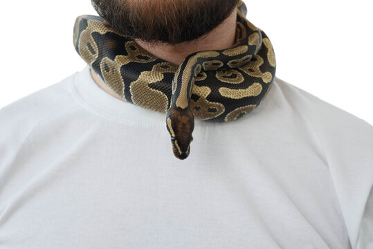 A man with a snake around his neck. White background. Snake around a man's neck.