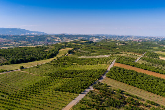 Aerial view over agricultural fields with cherry trees