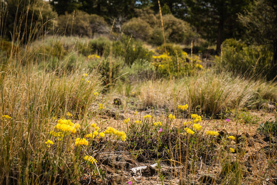 Colorful vegetation in the volcanic desert of Lava Beds national monument