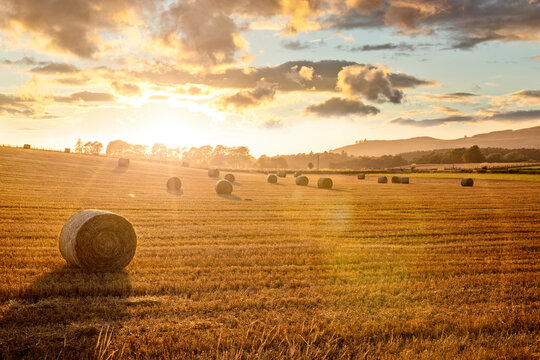 Hay bales in golden field with sunset summer background