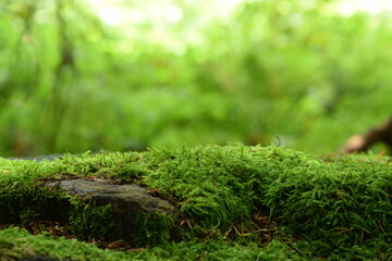 Moss on stones, green forest background, green moss, natural background, bokeh empty space, space for text.