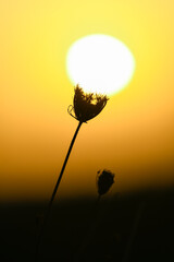 Fototapeta Wschód słońca na łące. obraz