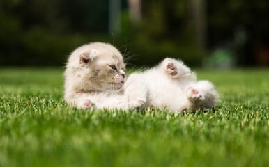 Obraz Kitten Playing on the Grass - fototapety do salonu