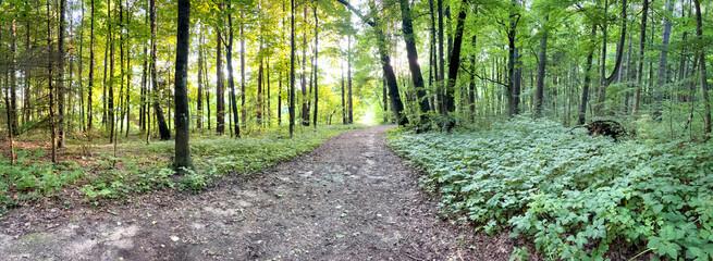 Fototapeta Tło z pustą drogą przez las obraz