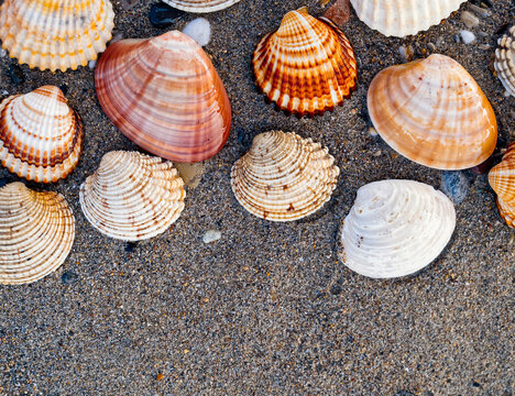 collection of seashells on wet sand beach as a natural pattern background, space for your text