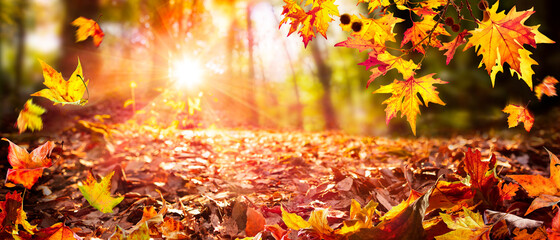 Leaves Falling In Defocused Autumn Forest With Sunlight