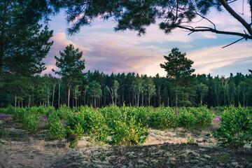 Nowe drzewa rosnące w lesie