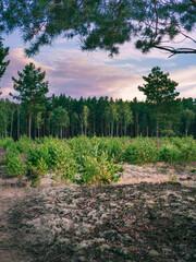 Młode drzewa rosnące w lesie