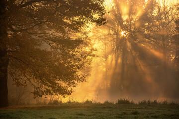 Promienie słoneczne w jesiennym parku