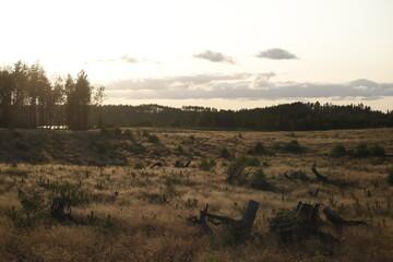 Obraz Krajobraz kaszubski kilka lat po trąbach powietrznych: Lipusz - fototapety do salonu