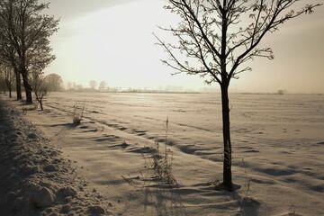 Obraz Zima, śnieg, pola - fototapety do salonu