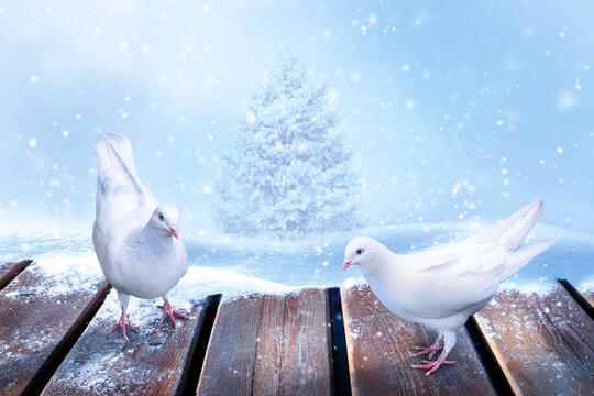 Winter snowy Christmas card. A pair of white doves on a wooden surface against the background of snowdrifts and a Christmas tree.