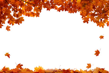 Fototapeta Autumn colored falling maple leaves isolated on white background obraz
