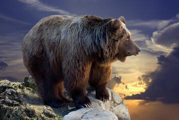 Fototapeta Brown bear on rock against sunset obraz