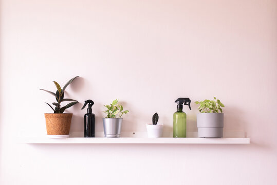 Beautiful house plants on shelf interior design in living room,Cozy home