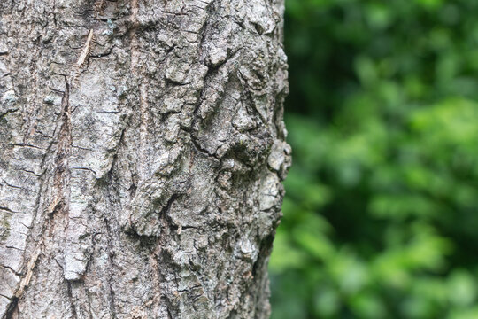 Close-up on the bark of a tree in a forest