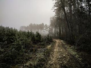 Fototapeta mgła obraz