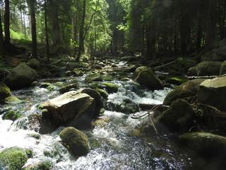 bory, drzew, drewna, krajobraz, park, jesienią, lato, szlak, okolica, woda, potok, kamienie, gras, strumień górski