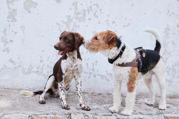 Psia przyjażń