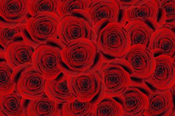 Obraz Bukiet róż. Tapeta  - fototapety do salonu