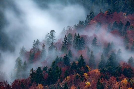 Autumn image with silhouette of forest with dense fog at dusk. Image taken with long exposure technic.