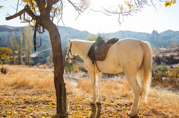 Horse in Cappadocia