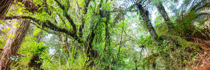 New Zealand forest