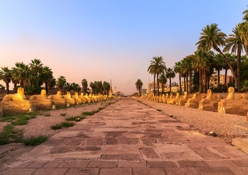 Luxor city, Sphinx alley evening view, Egypt