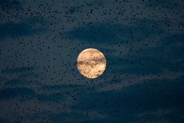 Fototapeta Pełnia księżyca obraz