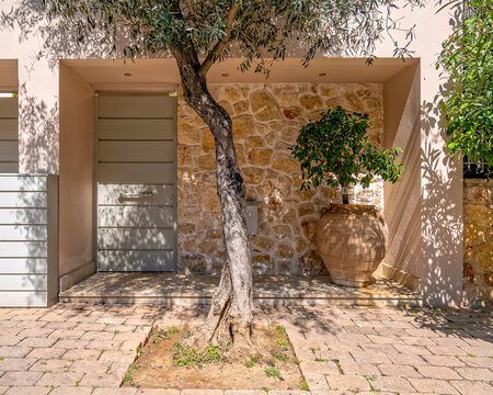 contemporary house external entrance door with olive tree and huge potted kumquat plant