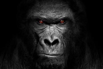 Gorilla mammal animal , black white wildlife