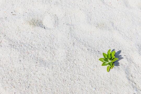 white sand in the Maldives