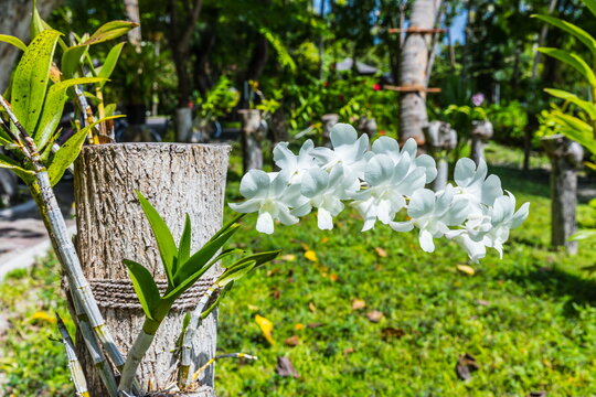 blooming orchids growing on tree stumps in the Maldives