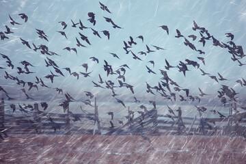 Fototapeta autumn landscape flying crows flock, stress concept autumn rain, flying black birds obraz