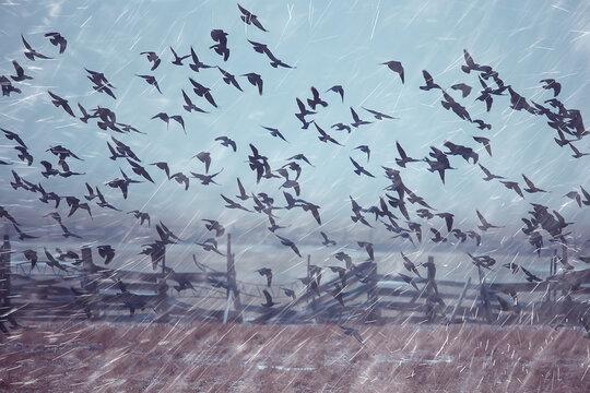 autumn landscape flying crows flock, stress concept autumn rain, flying black birds