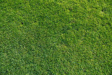 detail of grass at the soccer field
